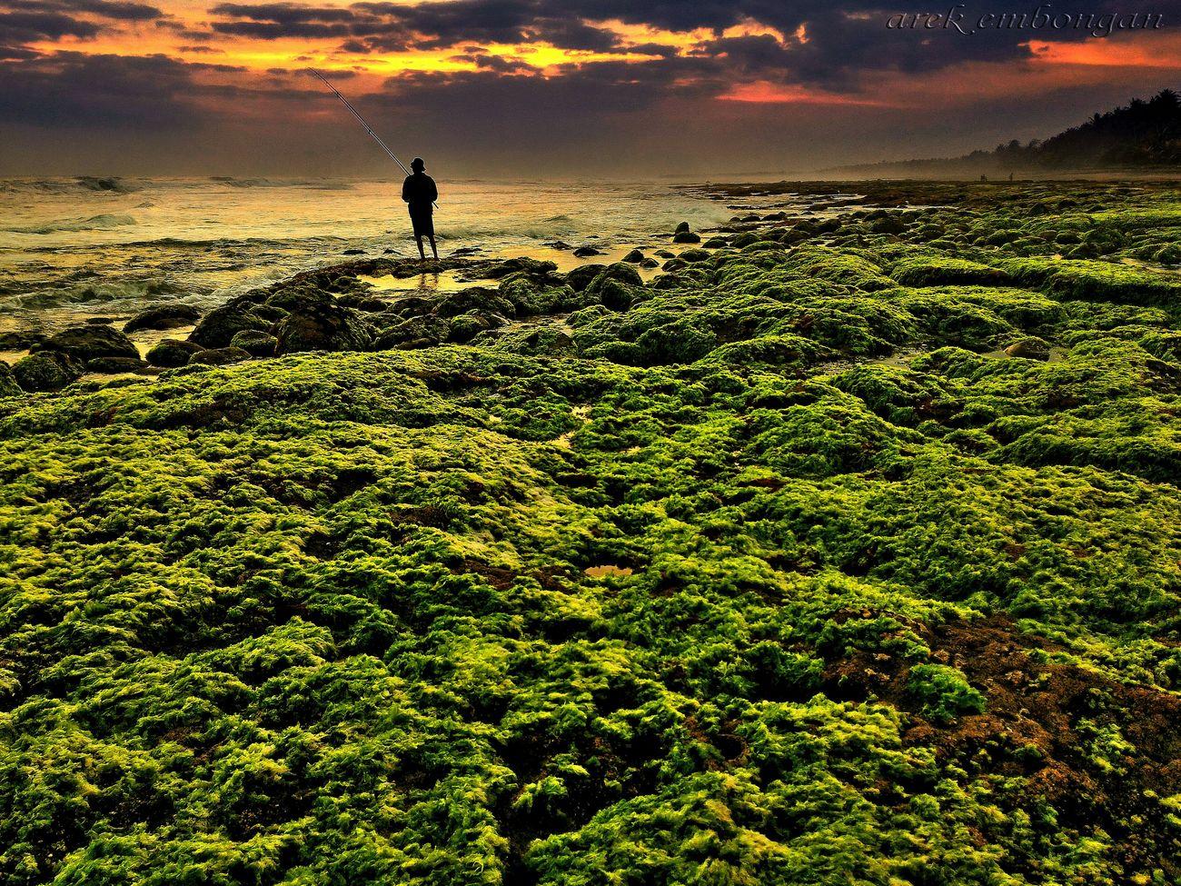 Summer Views Landscape #Nature #photography Landscape_Collection Landscape, Seascape, Peggy's Cove, Peaceful Nature And Lanscapes Lanscape #trees #sunset #wood #winter #sky Sunset_collection Landscape Lanscape Photography Sunset Silhouettes