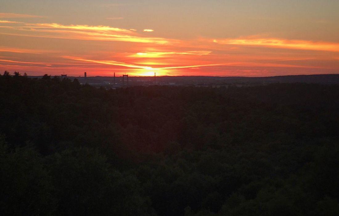 Bloodredsky Horizon Over Forest Sunset Treetops Horizontal Composition
