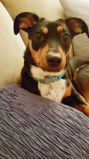 Henry Mypuppy Dogs Pets