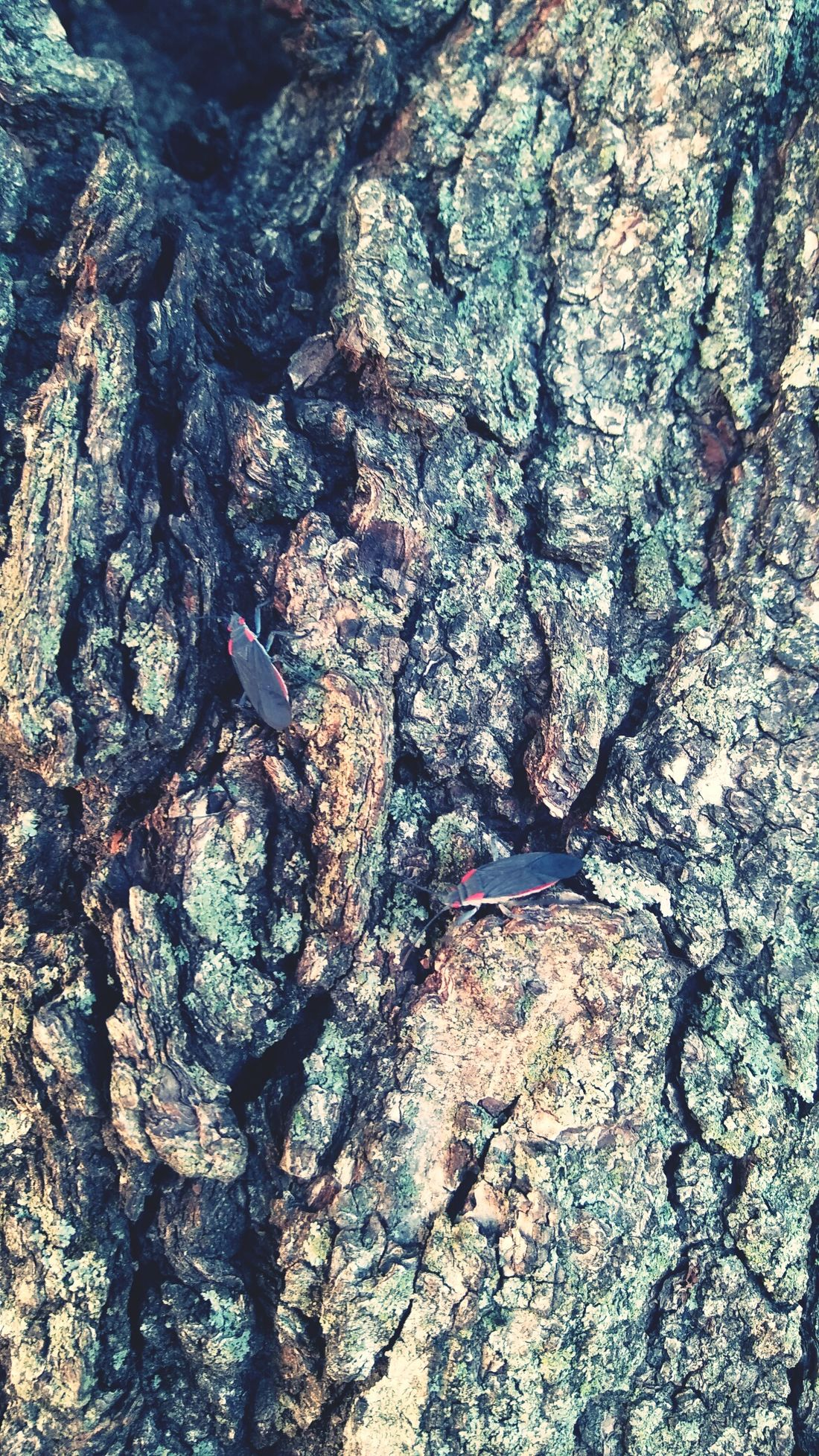 Full Frame No People Close-up Textured  Nature Outdoors Day Close‐up Photography Close-up Shot Close Up Tree Tree Trunk Bark Texture Bark Bug Bugs Bug On A Tree