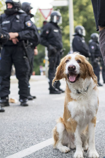 G20 Demonstration 2017 Fear Force G20 Gipfel G20 Summit Hamburg Hund NOG20 Polizei Uniform Animal Axvo Demonstration Demonstrations  Demonstrators Dog Helmet Helmets Outdoors People Pets Police Police Force Smile Weapon Weapons