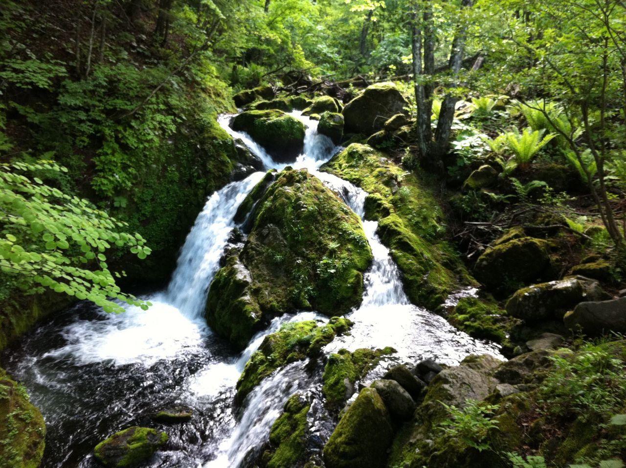 松原湖高原 Japan Nagano Saku Koumi Nature Nature Photography Nature_collection Naturelovers Mountain Mountains Forest Forestwalk Forest Photography River