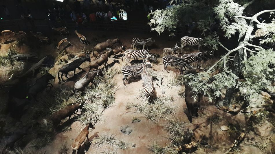 Shanghai Shanghai Natural History Museum Hello World Taking Photos Enjoying Life Details Of My Life My Life Zebras