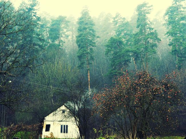 Tree Architecture Built Structure House Building Exterior Growth Nature Day Scenics Branch Green Color Beauty In Nature Rural Scene Cottage Outdoors Tranquility Tranquil Scene Foggy Non-urban Scene Mountain