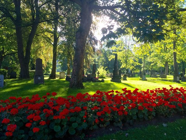 Graveyard Flowers Sunshine