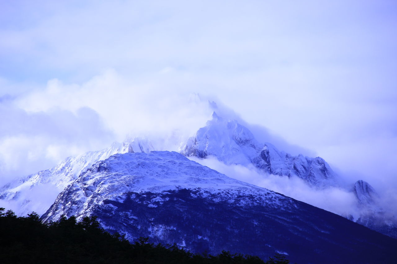 Cold End Of The World Nature Snow The Great Outdoors - 2017 EyeEm Awards Ushuaia Argentina Ushuaïa Wildlife Wildnature Winter