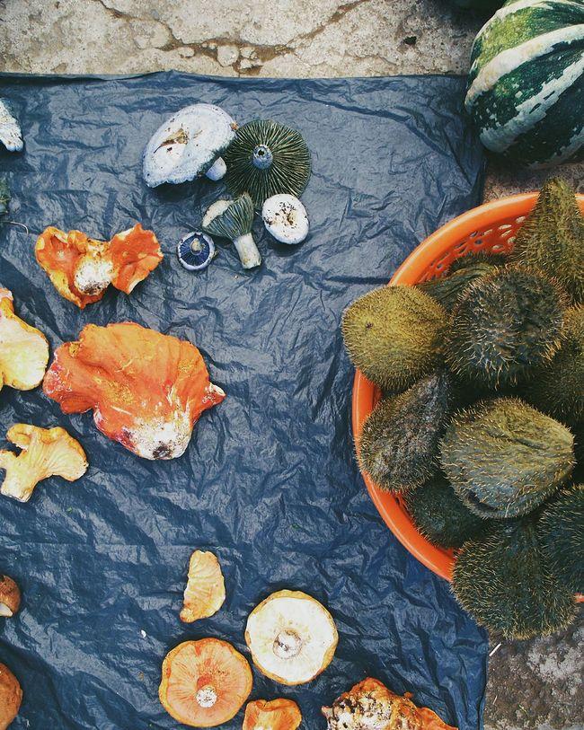 Yomochilero en la Fiesta del Hongo.