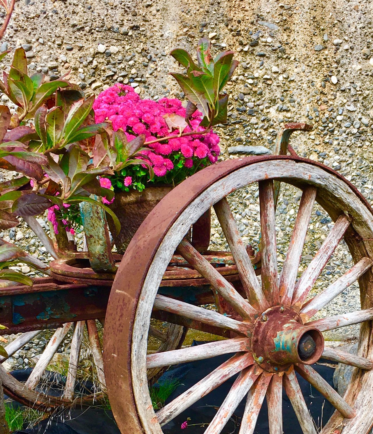 Wheel Wall - Building Feature Transportation Flower Leaf Run-down Old Obsolete Plant The Past Land Vehicle Mode Of Transport Deterioration Outdoors Freshness Damaged Growth Day Nature No People