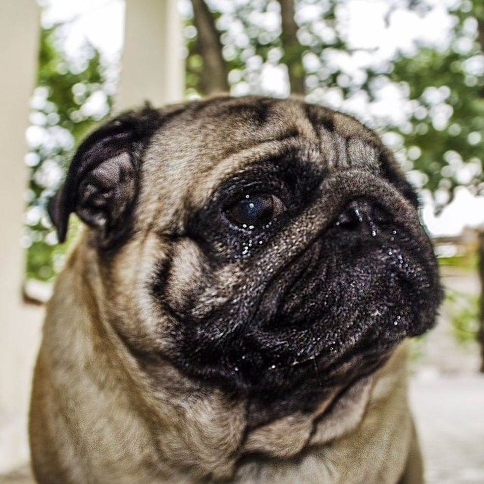 Др пес четподозрительно собака