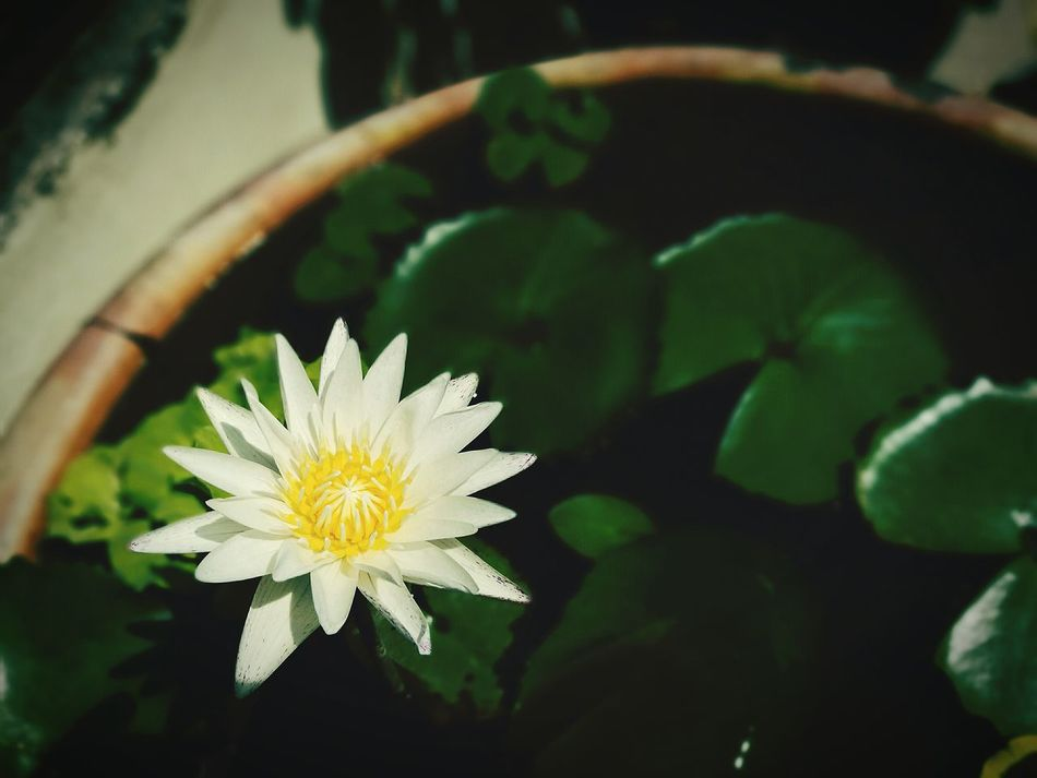 Flower Freshness Fragility Flower Head Petal Growth Leaf Blossom Close-up Water Single Flower In Bloom Plant Floating On Water Nature Springtime Beauty In Nature Selective Focus Water Lily Botany Macro Macro Photography Huawei P9 Leica HuaweiP9 Lily