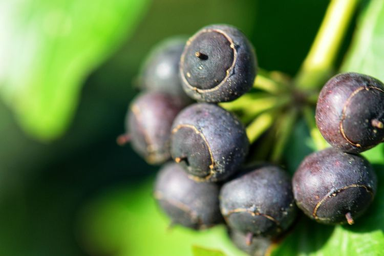 Fruit Food And Drink Food Freshness Agriculture Plant Close-up Outdoors No People Vegetable Green Color Day Healthy Eating Nature Growth Beauty In Nature