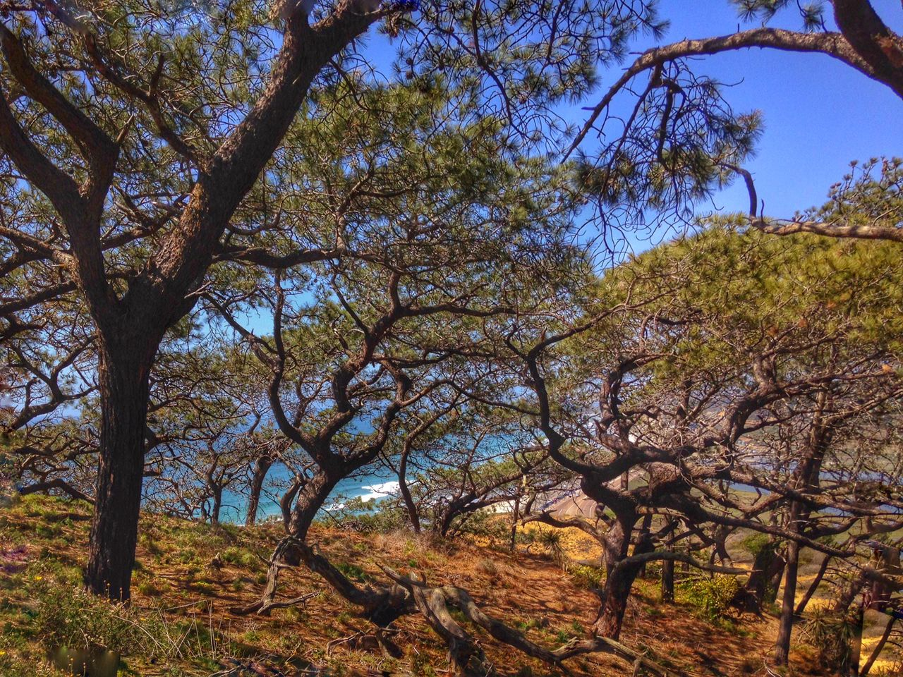 IPSScenery Hiking Nature Trees Beach Torrey Pines IPS2015Trees