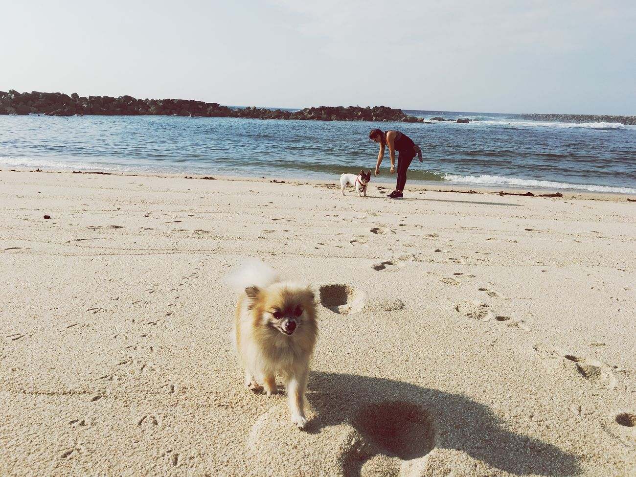 Beachday Babydog Viladoconde Sea Outdoors Dog Days Doglover