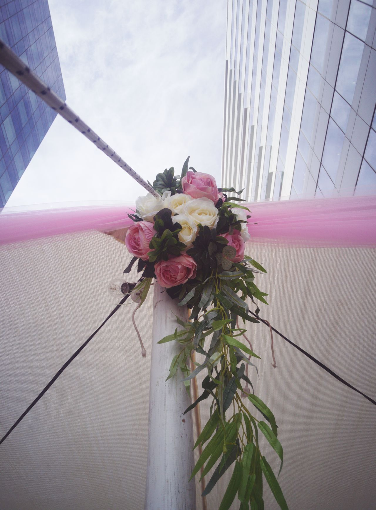 Millennial Pink Pink Color Flower Outdoors City Nature Low Angle View Built Structure Sky Architecture Building Exterior No People Close-up Freshness Flower Head Pink EyeEm EyeEm Team AMPt_community Tadaa Community Getty Images