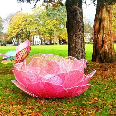 Pink Color Tranquility Tree Grass Outdoors Day Nature Arts Culture And Entertainment No People Birmingham UK Kingsheathpark Autumn Colors Autumn 2017
