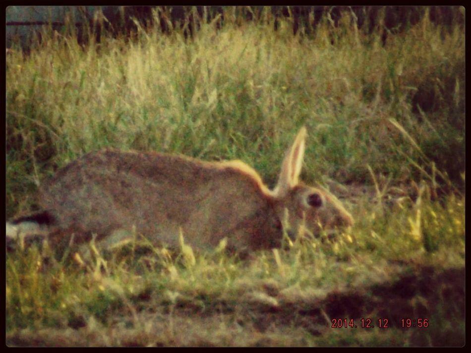 the killer bunny stalks his prey Killer Rabbit