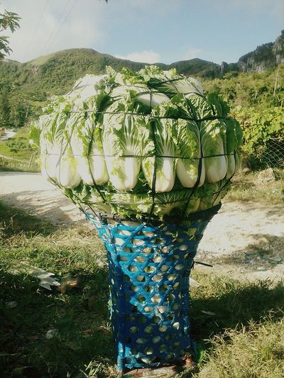 Lettuce Bouquet Of Vegetable Healthy Living My Awesome Travel Traveler Yourlife Is A Result Of The Choices You Make... If You Don't Like Your Life It Is Time To Start Making Better Choices.