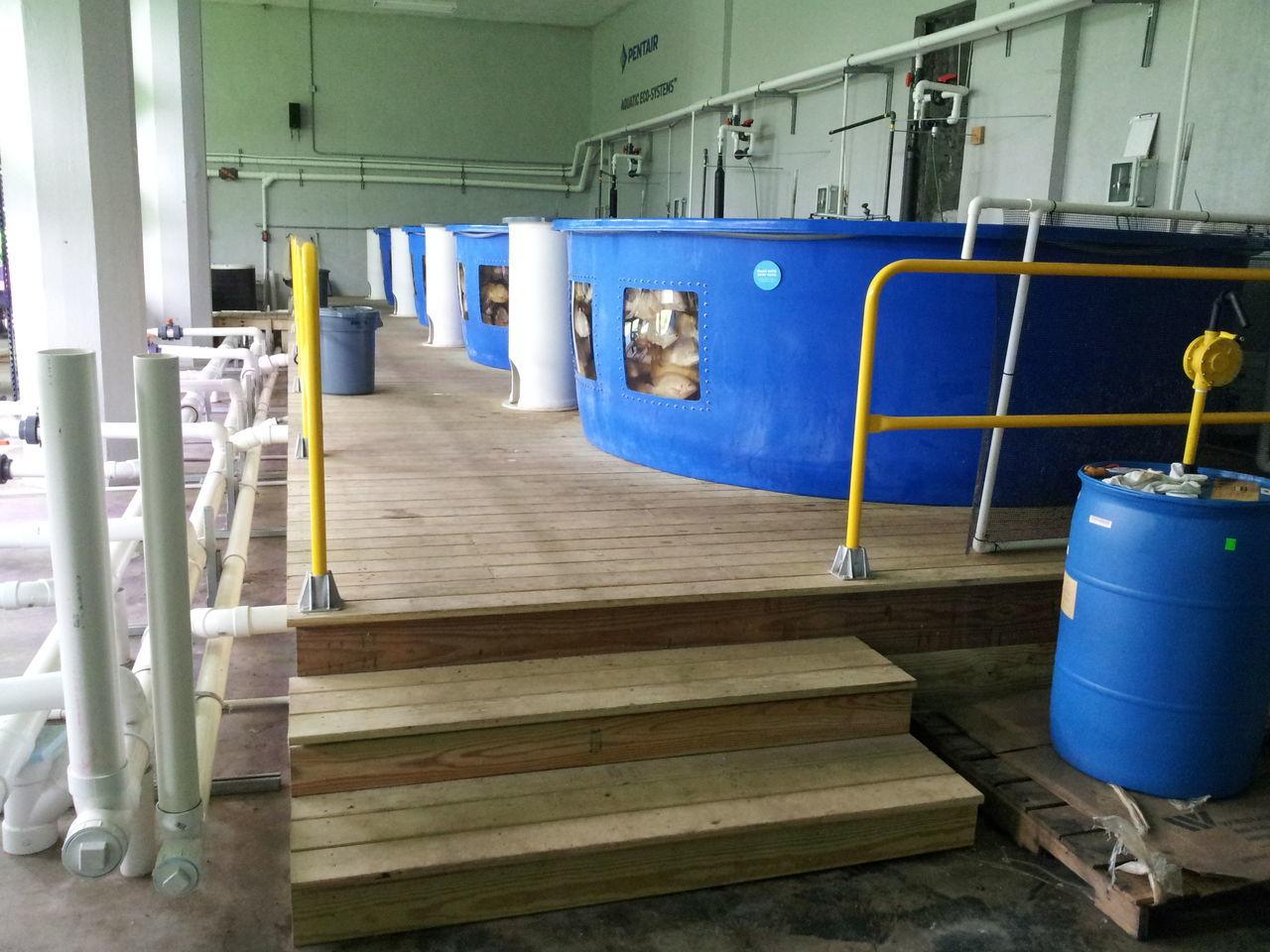 Aquaculture Alternative Agriculture Agriculture Agriculture Photography Agricultural Tilapia Tilapia Fish Tanks
