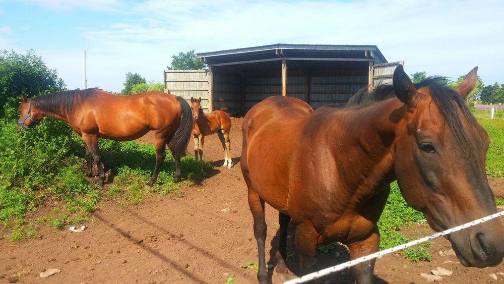 Horses Colt Nature Farm Life