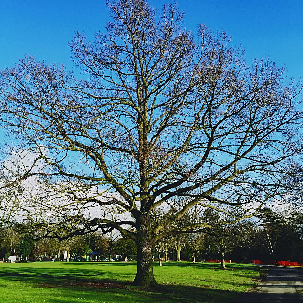 Queens Park Crewe Tree And Sky Tree EyeEm Nature Lover EyeEm Best Shots - Nature Blue Sky Eyeem Crewe Queen's Park Soaking Up The Sun Walking Around Walkingthedog Excercising Beautiful Day Showcase: February