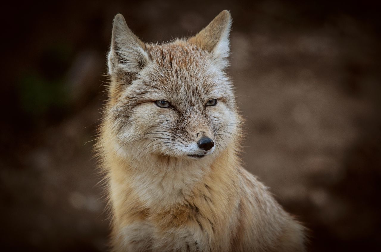 One Animal Animal Themes Animals In The Wild Mammal Animal Wildlife No People Close-up Portrait Wolf Outdoors Day Nature EyeEm Nature Lover EyeEm Best Shots EyeEm Best Shots - Nature Nature_collection Nature On Your Doorstep