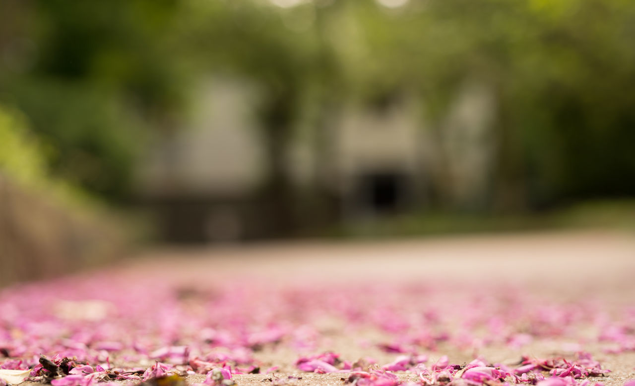 Fallen Pink Petals Beauty In Nature Bokeh Close-up Day Fallen Petals Flower Focus On Foreground Fragility Freshness Ground Level View Nature Nature Nature Photography Nature_collection No People Outdoors Park Park - Man Made Space Petal Pink Color Spring Springtime Tranquility