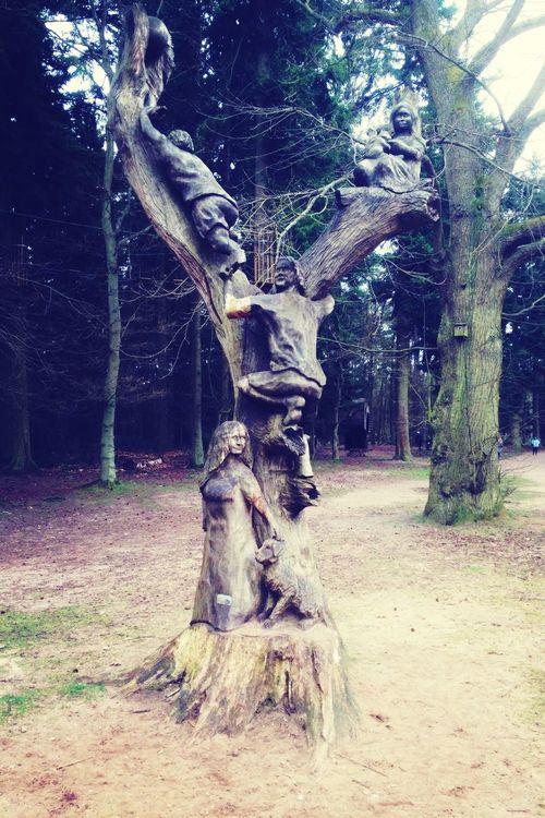 Tree Sculpture TreePorn Nature