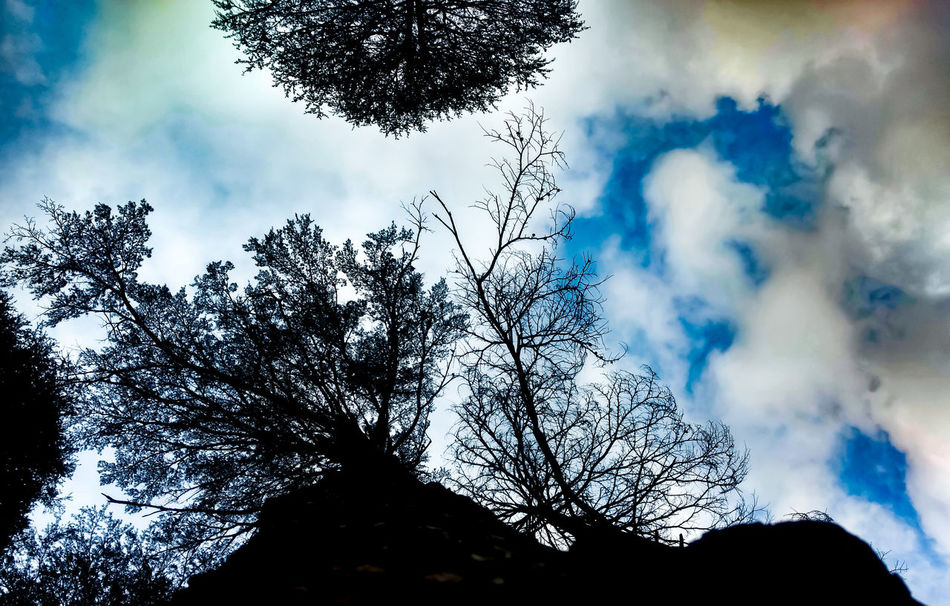 Sky is the limit Sky Tree Cloud - Sky No People Nature Close-up Silhouette Beauty In Nature Outdoors Fragility Day Nathatop Patnitop Sun Jammu Growth Motog4plus EyeEmNewHere Mountain Peak Mountain Range Mountain Mobilephotography JammuandKashmir Long Goodbye Beauty In Nature