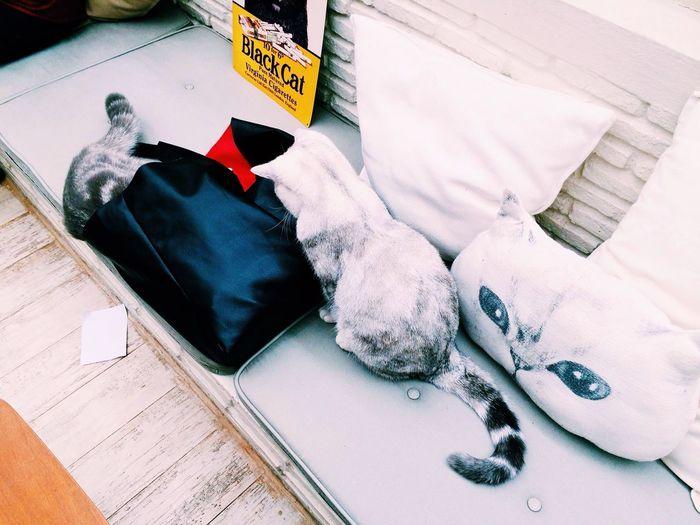 Meowww Purr Cat Cafe Club, Bangkok