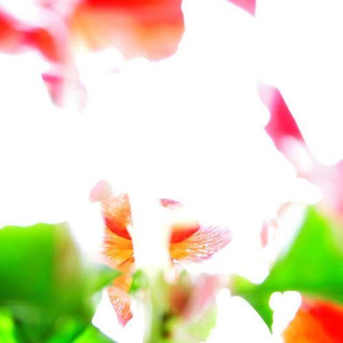 Flower 花 攝影 Flowers Photo Photograph Photoshoot Nikon D90 Nikonphotography Taiwan Linying