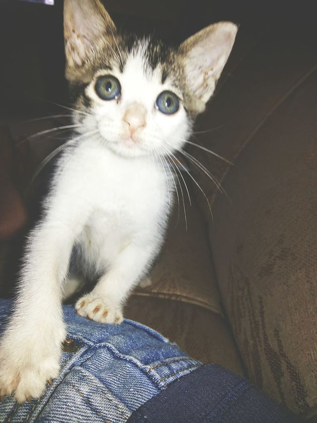 I found her on the street, brought home and now this litlle cat is very loved. Playing With The Animals Cat Lovers Animal_collection Cute Pets