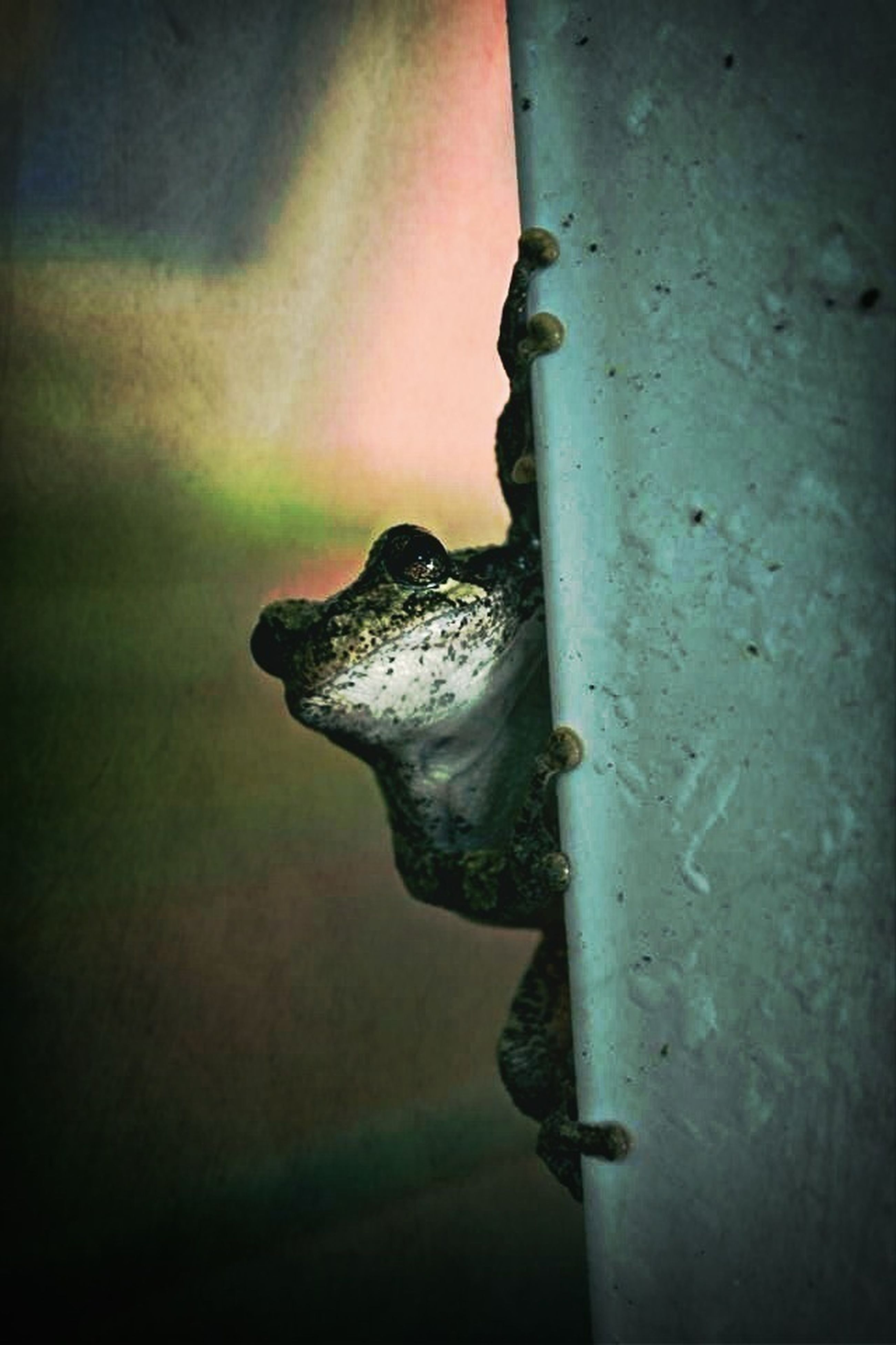 one animal, wall - building feature, close-up, selective focus, animal themes, focus on foreground, built structure, no people, indoors, wall, old, day, protection, metal, architecture, safety, copy space, weathered, low angle view