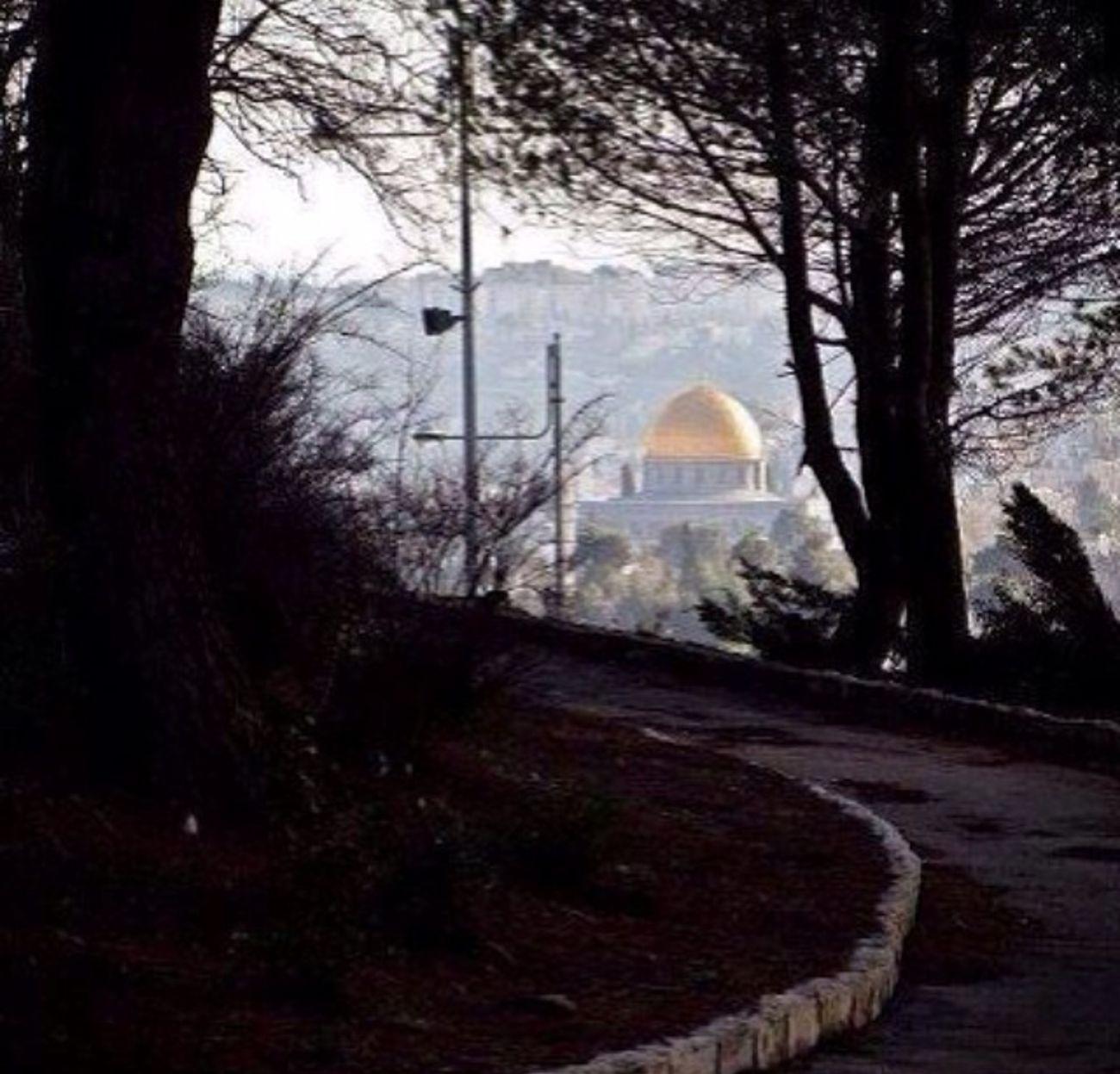 Masjid FreePlaestine Gaza Muslim
