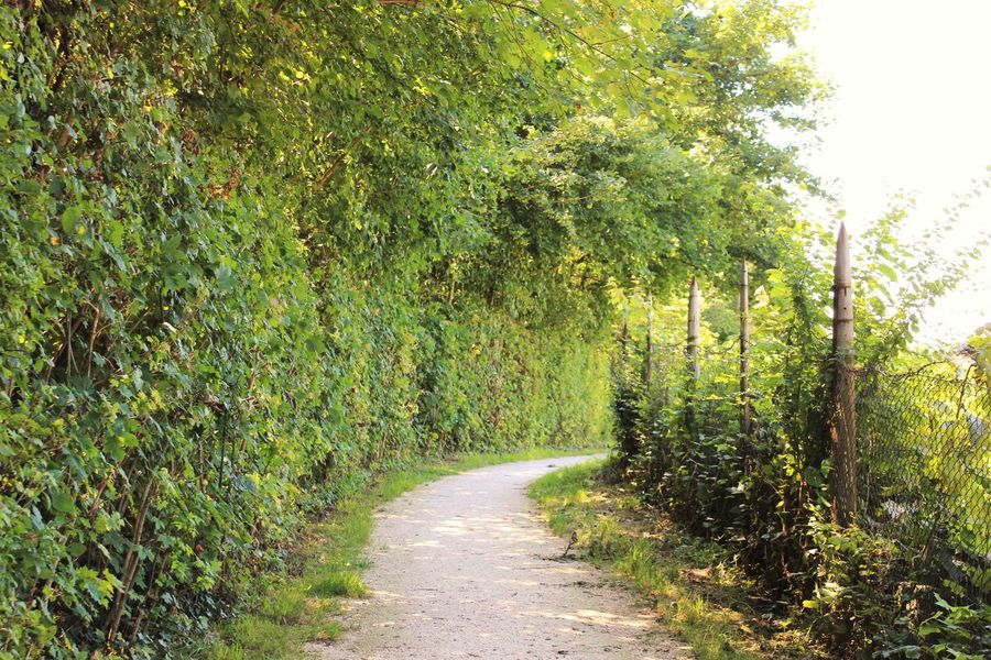 Alone Bavaria Beauty In Nature Canon1200d Footpath Freilassing Germany Goingforawalk Nature No People Pathway The Way Forward Walkway