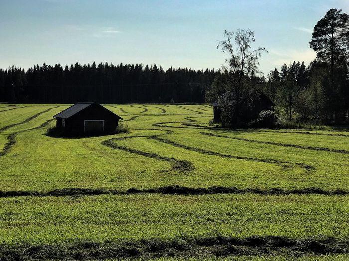 Field Landscape Growth Nature Scenics Hay Latesummer Ho Skördetid Sensommar