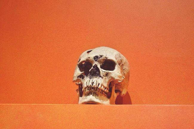 Cráneo. Museo de Monte Albán. Enero 2016. Oaxaca Monte Alban Skull Bones