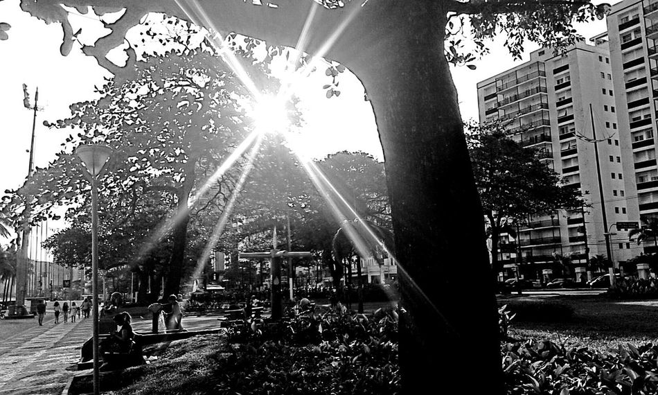 Blaxkandwhite Bw_friday_challenge Bw_collection Bw Streetphotography Bnw_friday_eyeemchallenge Monochrome Tree Ligth And Shadow Hdr_Collection - Gonzaga - santossp