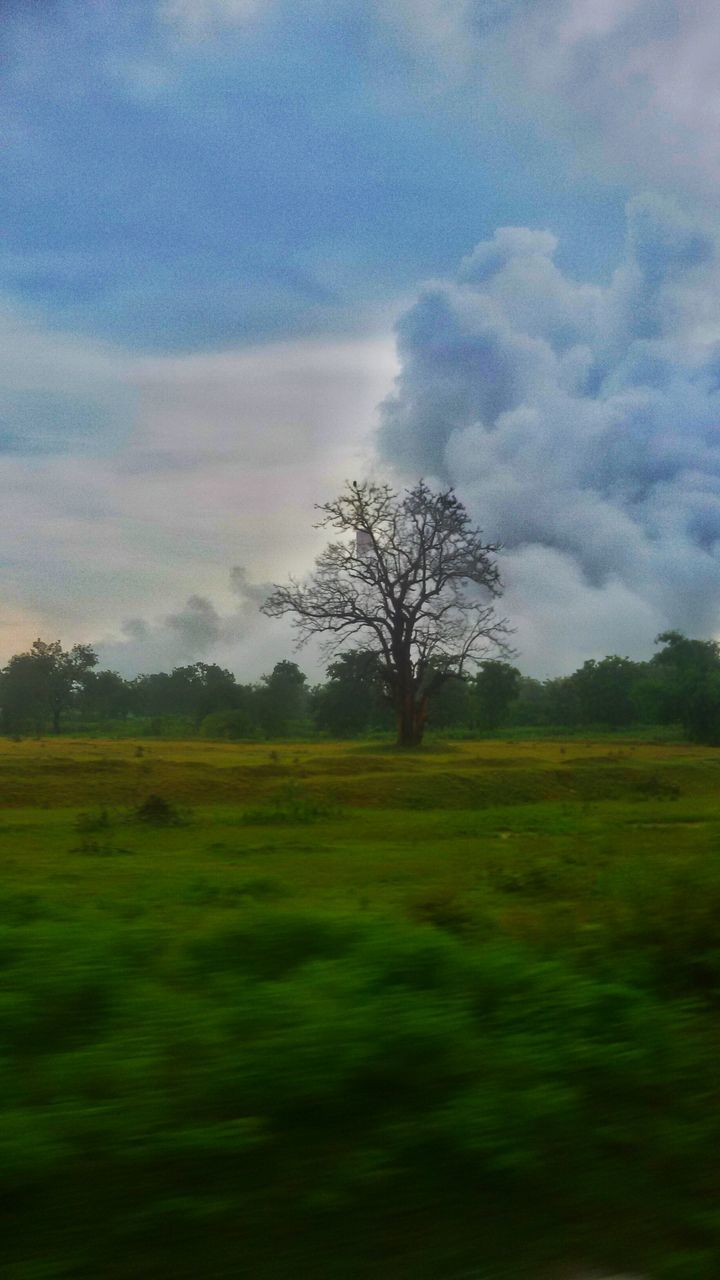 tree, landscape, tranquility, sky, nature, field, beauty in nature, tranquil scene, cloud - sky, scenics, no people, outdoors, grass, day