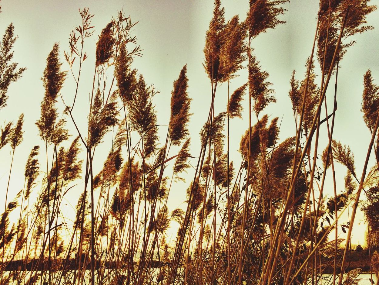 Rushes Grass Lakeshore Learn & Shoot: Simplicity Showcase: November
