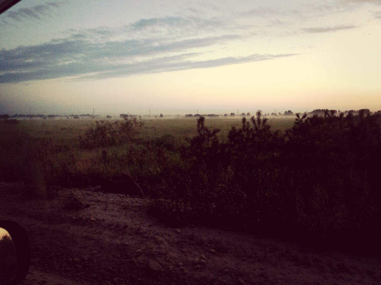 Ландшафт поле туман
