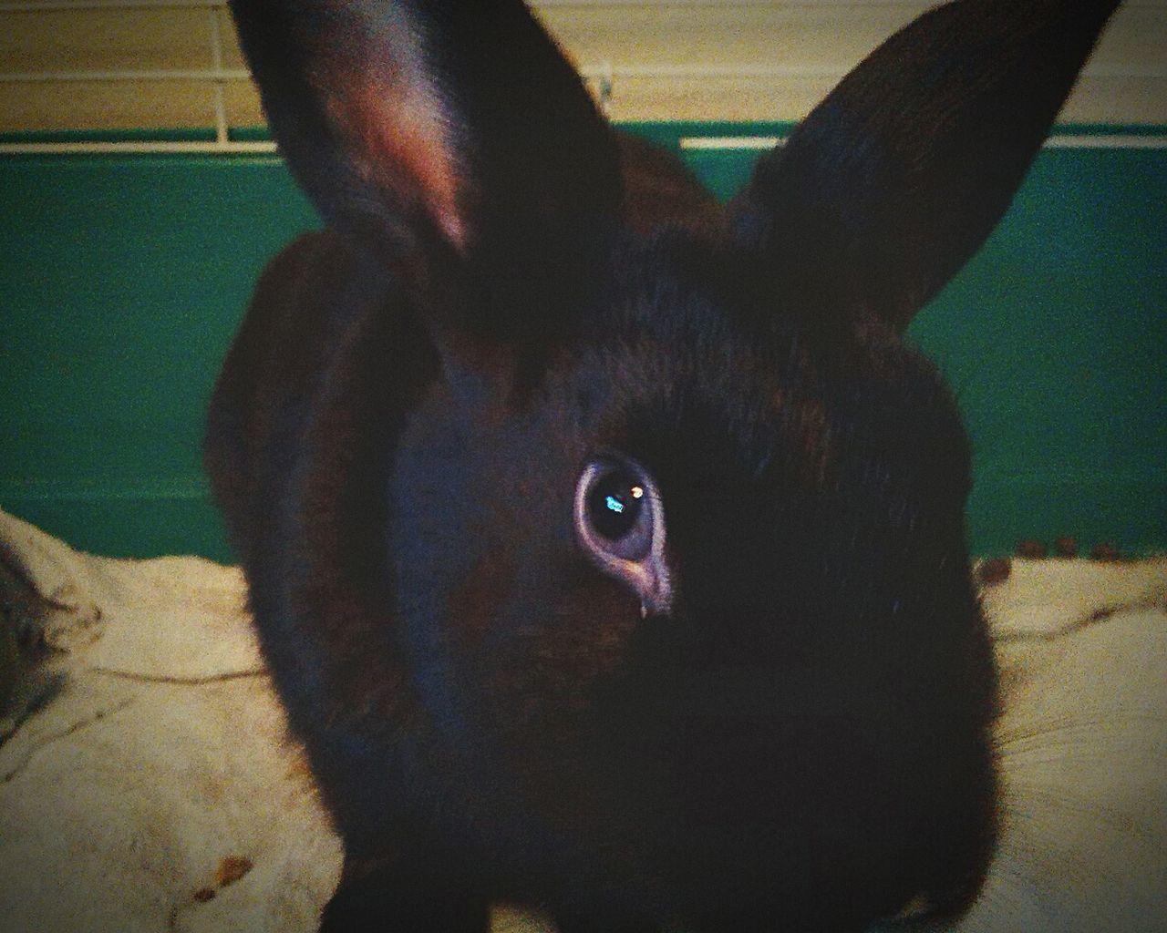 Srgt. Foofu Rabbit ❤️ Pets Taking Photos