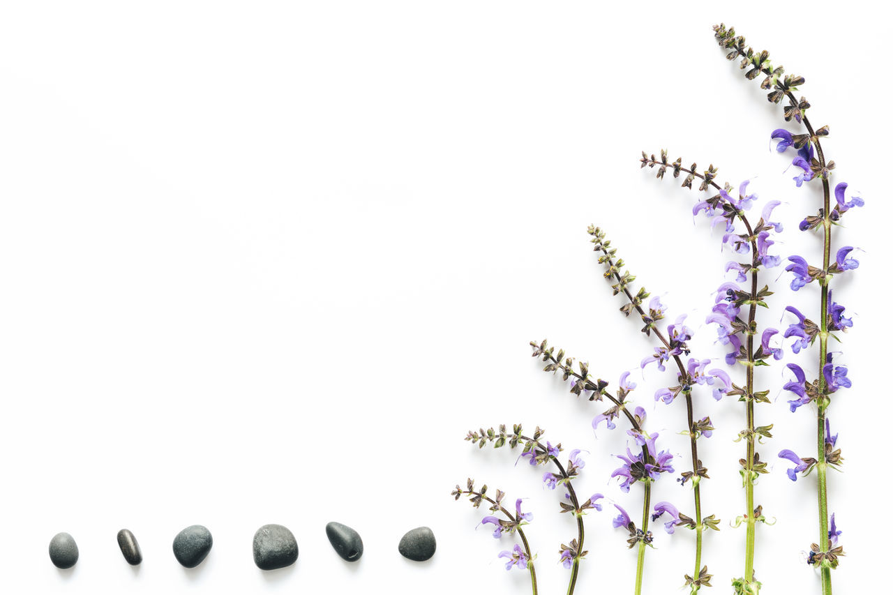 Purple meadow flowers (meadow clary) and stones arrangement on white background. Above Arrangement Backgrounds Beauty In Nature Branch Close-up Composition Copy Space Floral Floral Pattern Flower Fragility Frame Freshness Growth In A Row Meadow Nature No People Pebble Purple Stone Studio Shot White Background White Color