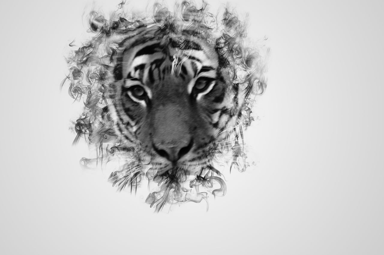 Portrait Looking At Camera White Background Close-up Headshot Tigers Smoke Greyscale Tigereyes GIMP Photo Editor Bnw Photography Edit Prague♡ Prague No People Abstract Art Chzech Nature Animal Eye Animal Portrait Animals Posing Illuminated BYOPaper!