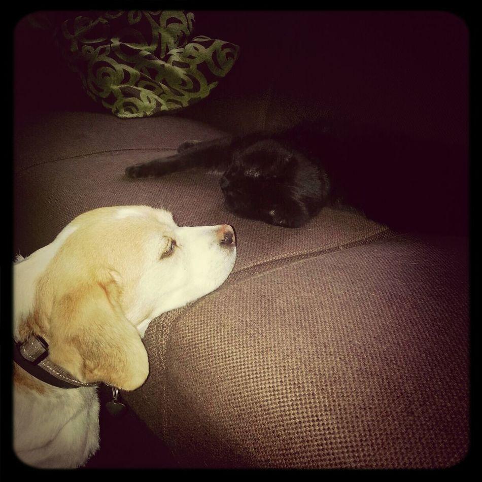 Dog Bestfriends Cat Real Love  Kaatje♥ Ado