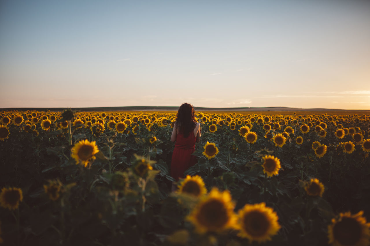 Beauty In Nature Clear Sky Field Flower Growth Landscape Nature Plant Real People Rear View Rear View Red Dress Red Dress ♡ Rural Scene Scenics Standing Sunflower Sunflower Field Sunflowers Sunflowers Field Sunflowers🌻 Sunflower🌻 Sunset Women Young Women
