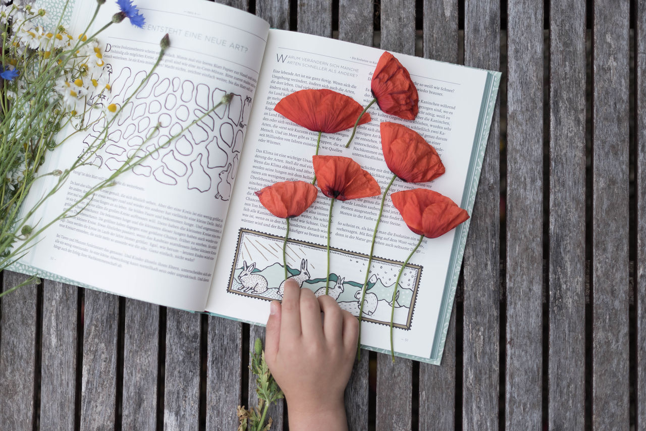 Book Child Childhood Childhoodunplugged Children's Portraits Close-up Dried Flowers Fieldflower Fieldflowers Flatlay Hand Naturelover Poppy Flowers Poppylove Red Summerflowers First Eyeem Photo TakeoverContrast