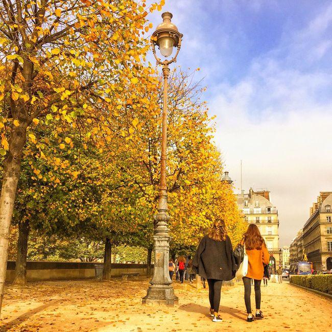 Bonsoir Paris! Goodnight Paris! Tree Autumn Parisweloveyou Paris ❤ Nature Autumn Leaves Photooftheday EyeEm Best Shots Tree Tuileries Garden