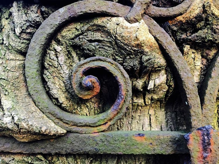 as time goes by... As Time Goes By Beauty In Nature Fence Nature_collection No People Outdoors Overgrown Reconquest Rusty Spiral Symbiosis Symbiotic Relationship Textured  Tree Tree Trunk Tree_collection