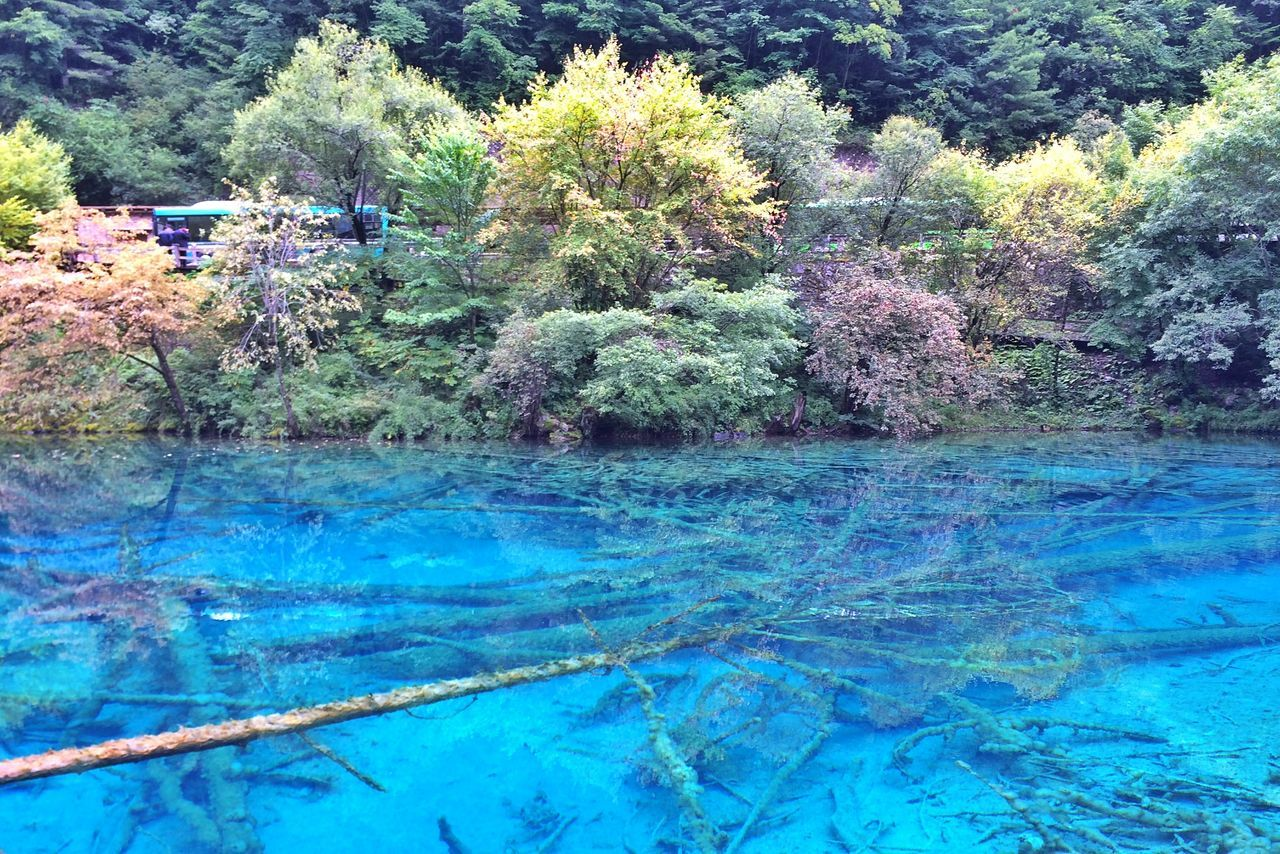 Blue Growth Tree Water Nature No People Outdoors Day Beauty In Nature Travel Destinations Jiuzhaigou Lake Landscape Tourism China Sichuan Sichuan Province