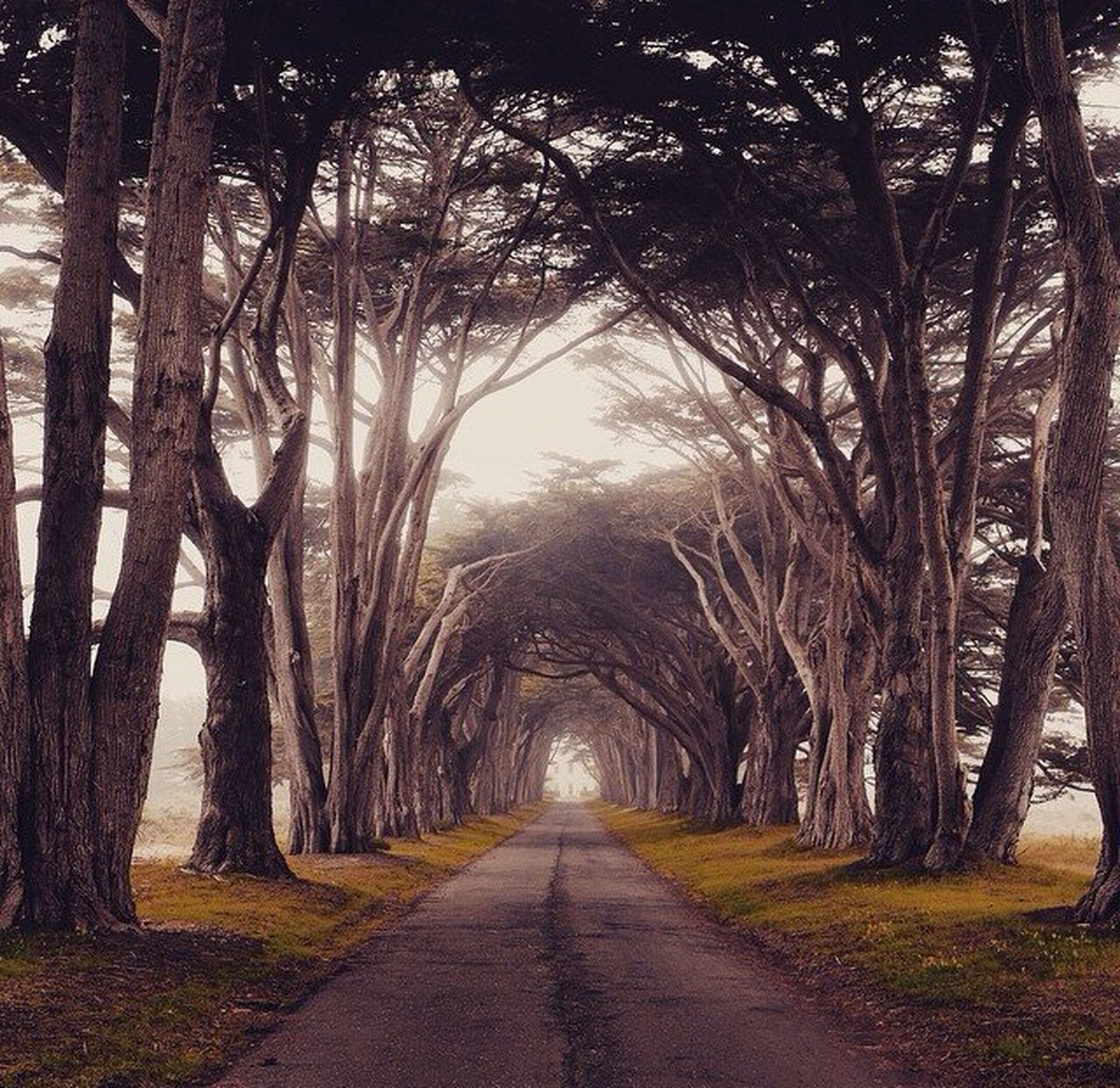 the way forward, tree, diminishing perspective, vanishing point, treelined, road, tranquility, transportation, empty road, bare tree, tranquil scene, nature, tree trunk, empty, long, branch, growth, dirt road, country road, scenics